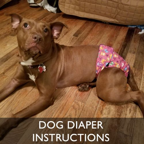 Barkertime Dog Diaper Wearing Instructions