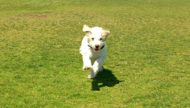 toby running - edited - small size