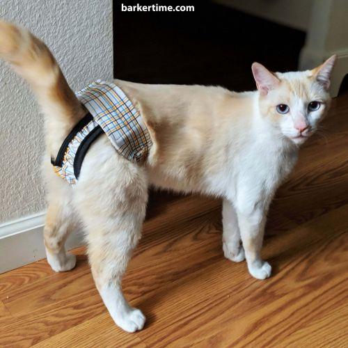 cat diaper
