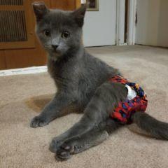 barkertime cat diaper