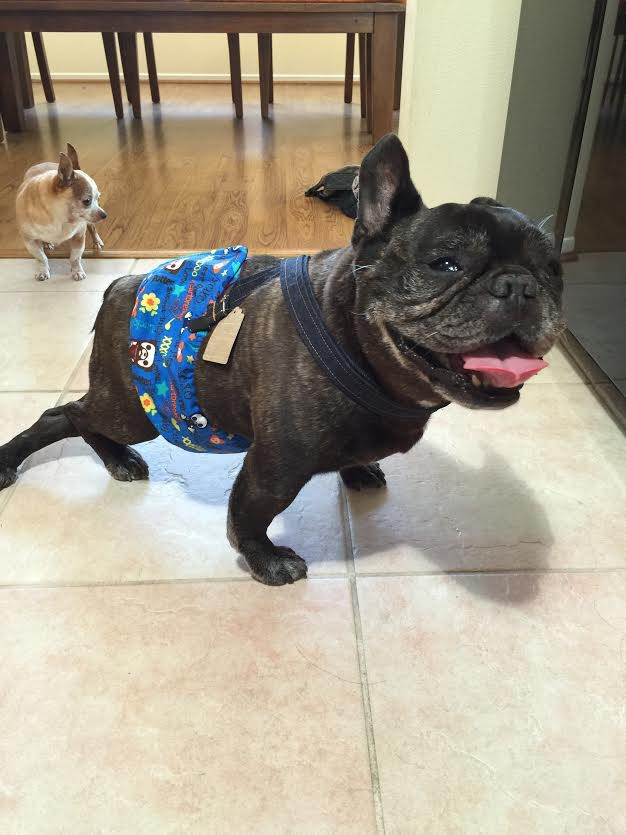 Barkertime Spoiled Rotten Sweet Baby Washable Dog Belly Band Male Wrap