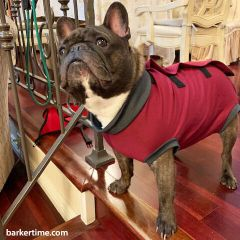 french bulldog peejama