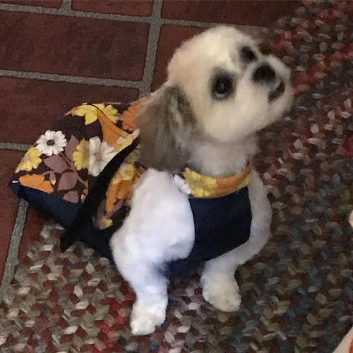 paralyzed shih tzu dog drag bag