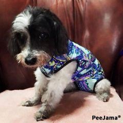 peejama dog recovery suit onesie