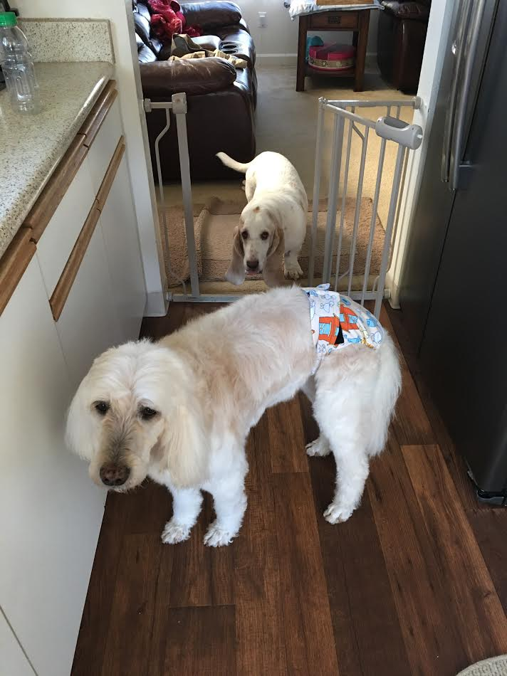 Barkertime Dog Diapers