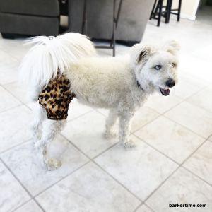 Cheetah Washable Dog Diaper Pants