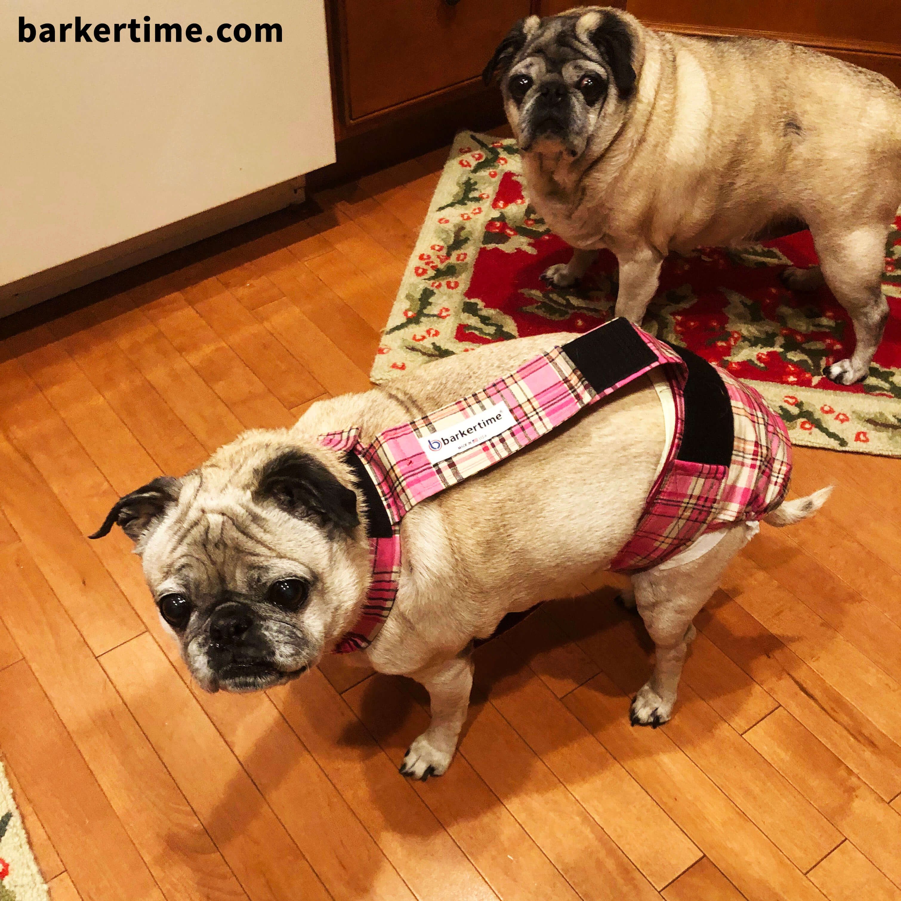pug dog diaper