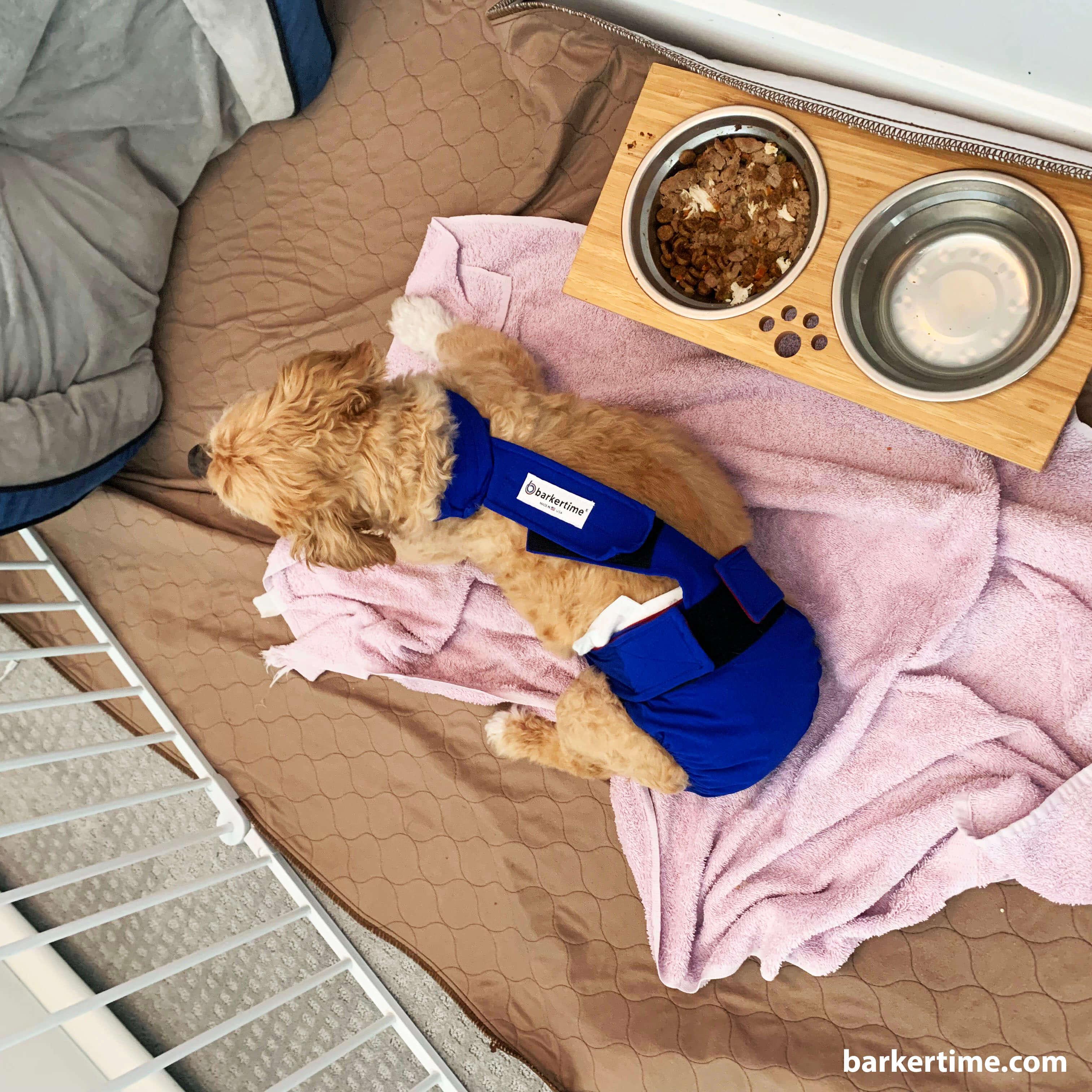 escape proof dog diaper overall