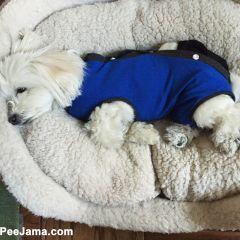 dog onesie recovery suit
