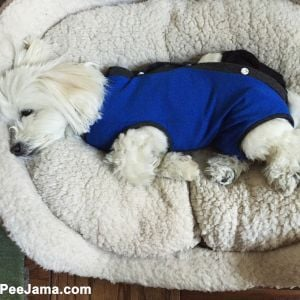 dog onesie recovery suit