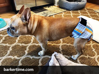 french bulldog incontinent dog diaper