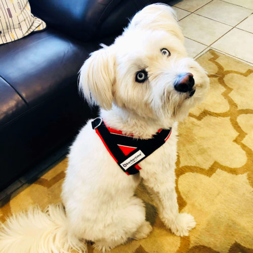 toby - dog harness 3