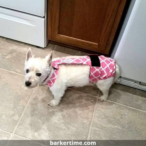 west highland terrier dog diaper