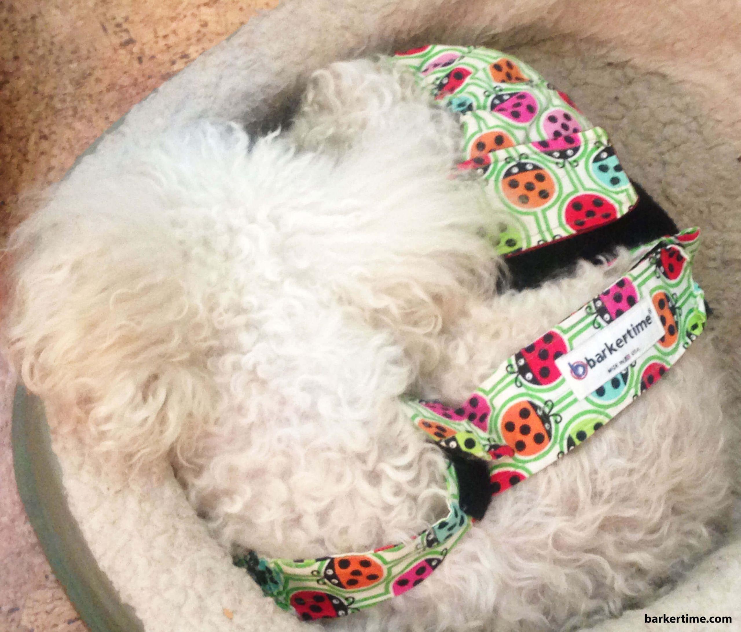 doodle poodle dog diaper